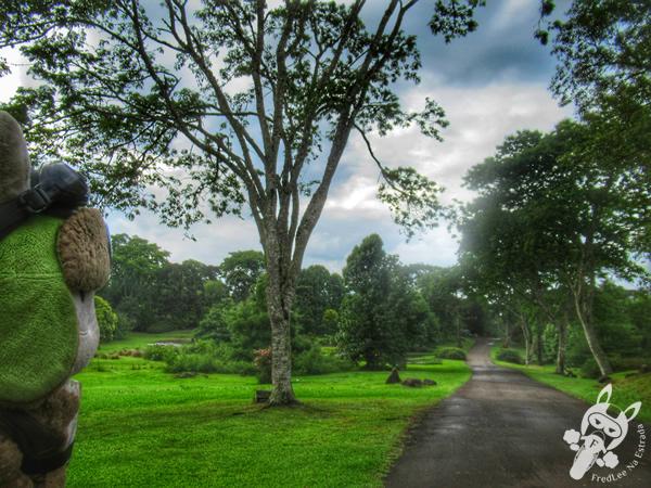 Jardim Botânico de Faxinal do Céu   Faxinal do Céu - Pinhão - Paraná - Brasil   FredLee Na Estrada