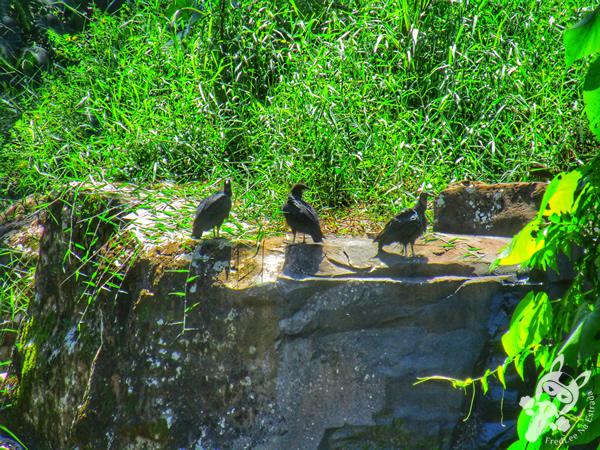 Parque da Cascata | Ipira - Santa Catarina - Brasil | FredLee Na Estrada