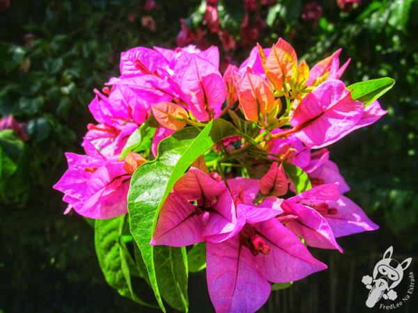Flores - Mirante Parque da Cascata | Ipira - Santa Catarina - Brasil | FredLee Na Estrada