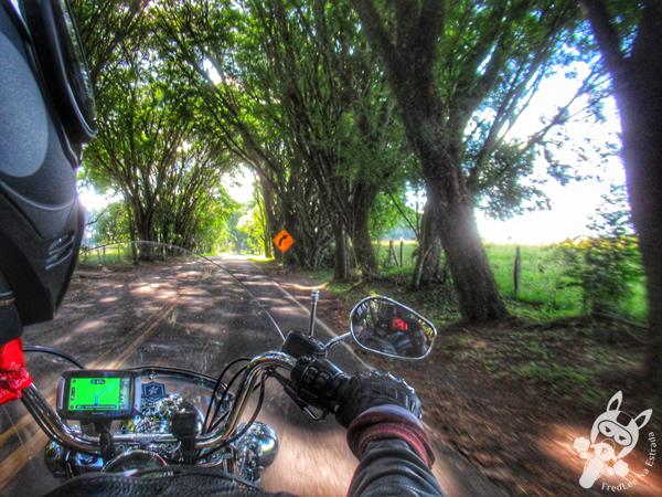 Colônia Witmarsum | Palmeira - Paraná - Brasil | FredLee Na Estrada