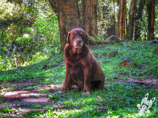 Cão guia Café | Parque Salto Santa Rosa - Barreiro | Tibagi - Paraná - Brasil | FredLee Na Estrada