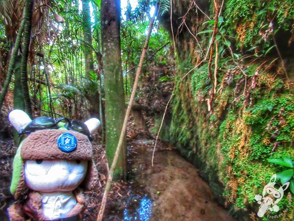 Fenda do São Dama | Trilha no Cânion Guartelá - Cânion do Rio Iapó | Tibagi - Paraná - Brasil | FredLee Na Estrada