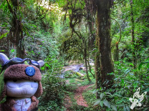 Reserva Particular do Patrimônio Natural Ninho do Corvo | Prudentópolis - Paraná - Brasil | FredLee Na Estrada