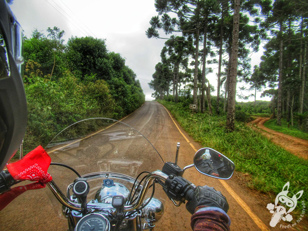 Estrada Guaicará | Guarapuava - Paraná - Brasil | FredLee Na Estrada