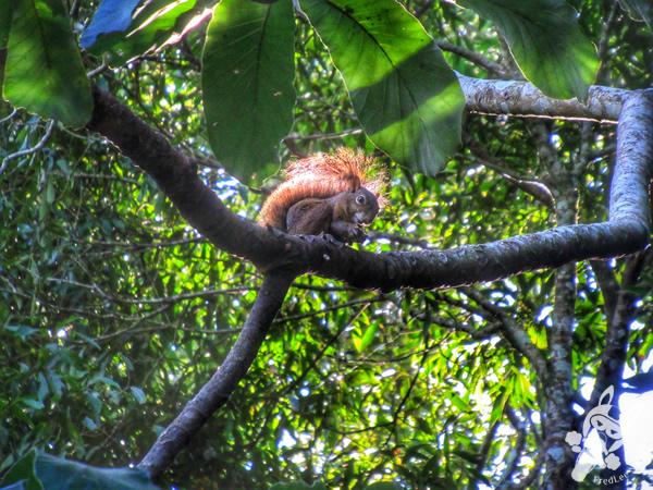 Caxinguelê - Trilha das Cataratas | Parque Nacional do Iguaçu - Cataratas do Iguaçu | Foz do Iguaçu - Paraná - Brasil | FredLee Na Estrada