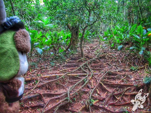 Trilha do Topo do Morro das Aranhas - Praia do Santinho | Florianópolis - Santa Catarina - Brasil | FredLee Na Estrada